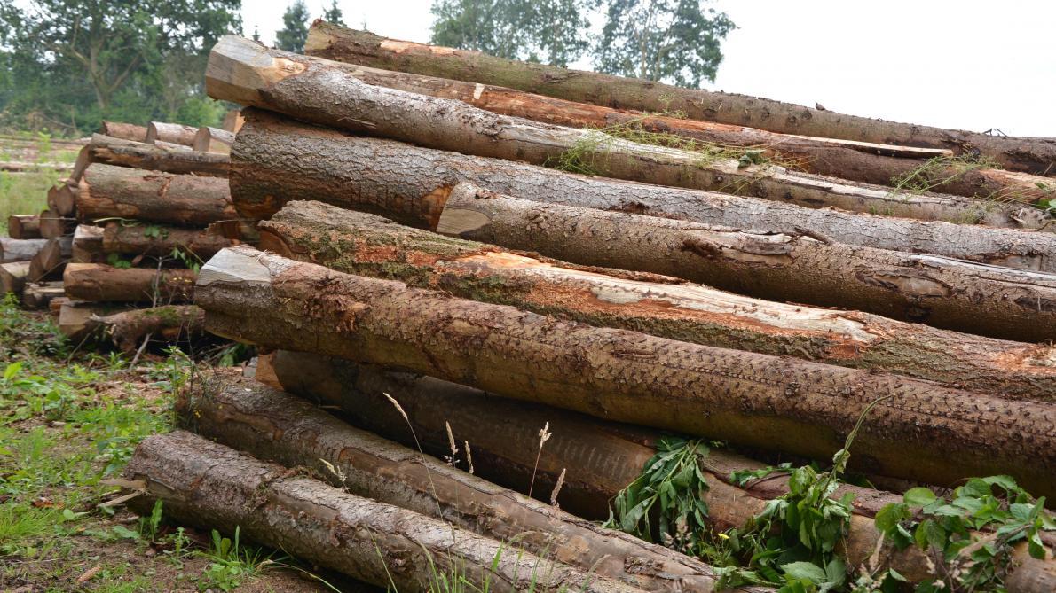 Prix moyens des bois sur pied - Coupe de bois de chauffage sur pied a vendre ...