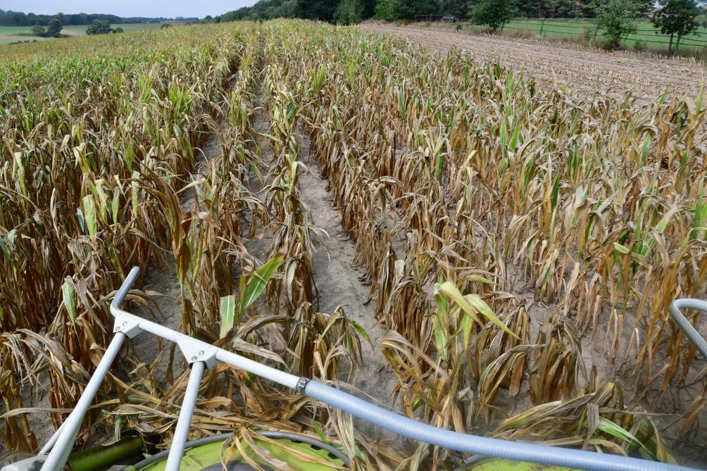 Des récoltes précoces et régulièrement misérables en termes quantitatif et  qualitatif. Tel est le bilan faa8135c90