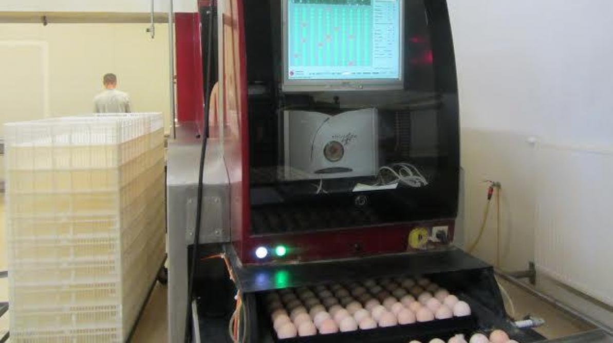 Alimentation des poulets de chair et porcs quels peuvent - Taux d humidite dans une chambre de bebe ...