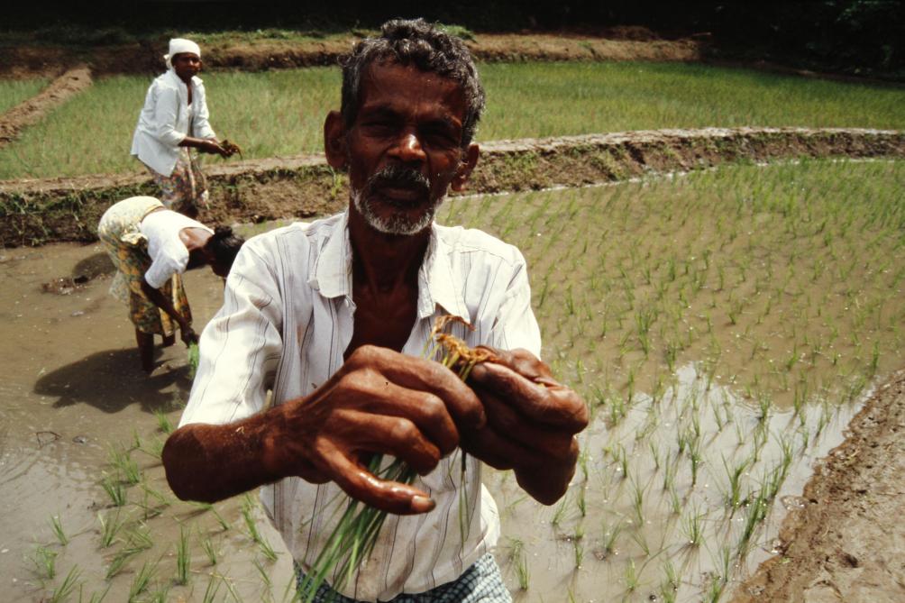 Les petits producteurs indiens craignent que la libéralisation interne des marchés soit une fausse bonne idée et accentue leur précarité.
